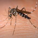 Mais duas mortes por dengue são confirmadas no Estado