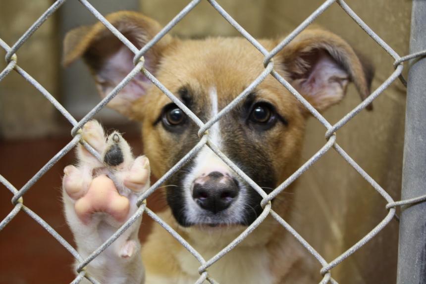 Maus tratos e abandono de animais podem gerar multas de até R$ 4 mil