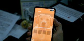 Aplicativo Petis tem o objetivo de facilitar o acesso à castração de animais sem dono e de organizações não governamentais. Foto: Diretoria de Comunicação/PMM