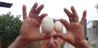 Gilberto Marcheto ficou impressionado com o tamanho do ovo. Foto: Divulgação