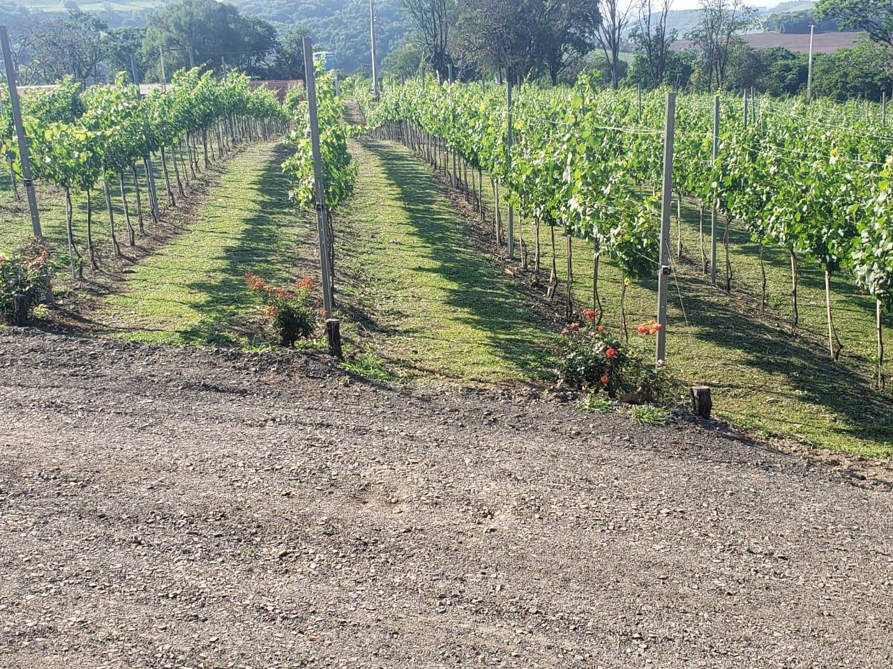 Aberta a visitação e realização de eventos, a Vinícola Casa Carnasciali produz uvas chardonnay, pinot noir e shiraz, contando também com uma estrutura de restaurante wine bar