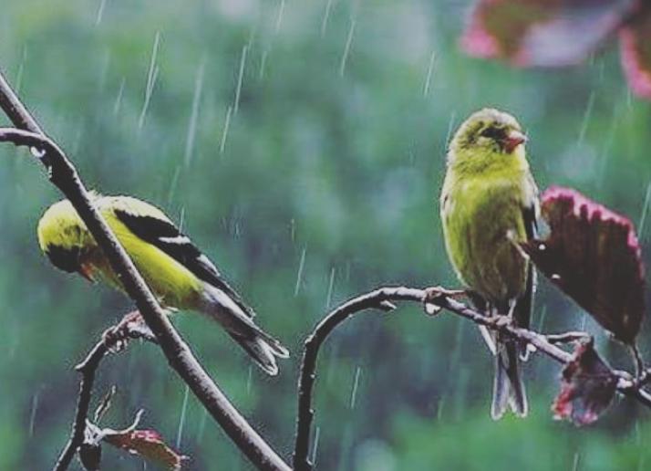 Toda relação deve estar firmada, tanto na fidelidade quanto na verdade. Se não houver verdade, fidelidade e amor, que é o sentimento mais puro da compreensão, na primeira chuvinha ela não aguenta e vai tudo para o chão.