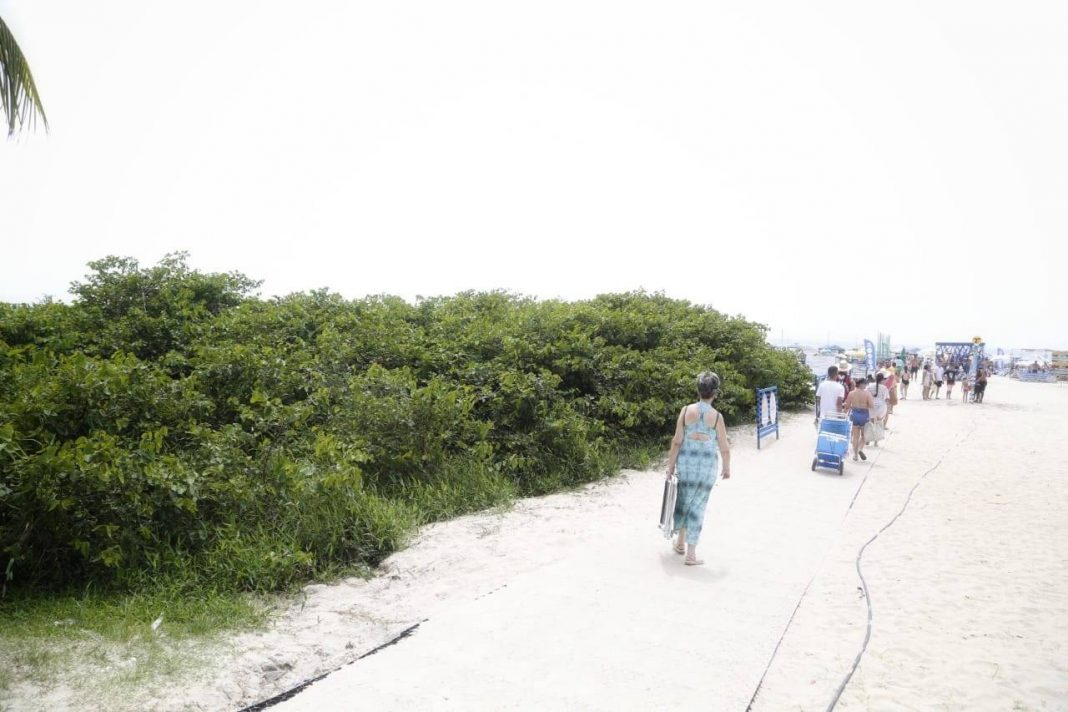 A vegetação acoplada na restinga na orla marítima atingiu as calçadas e as alturas das plantas exóticas, que estavam favorecendo a proliferação de dengue, além de crimes como assaltos e uso de drogas.