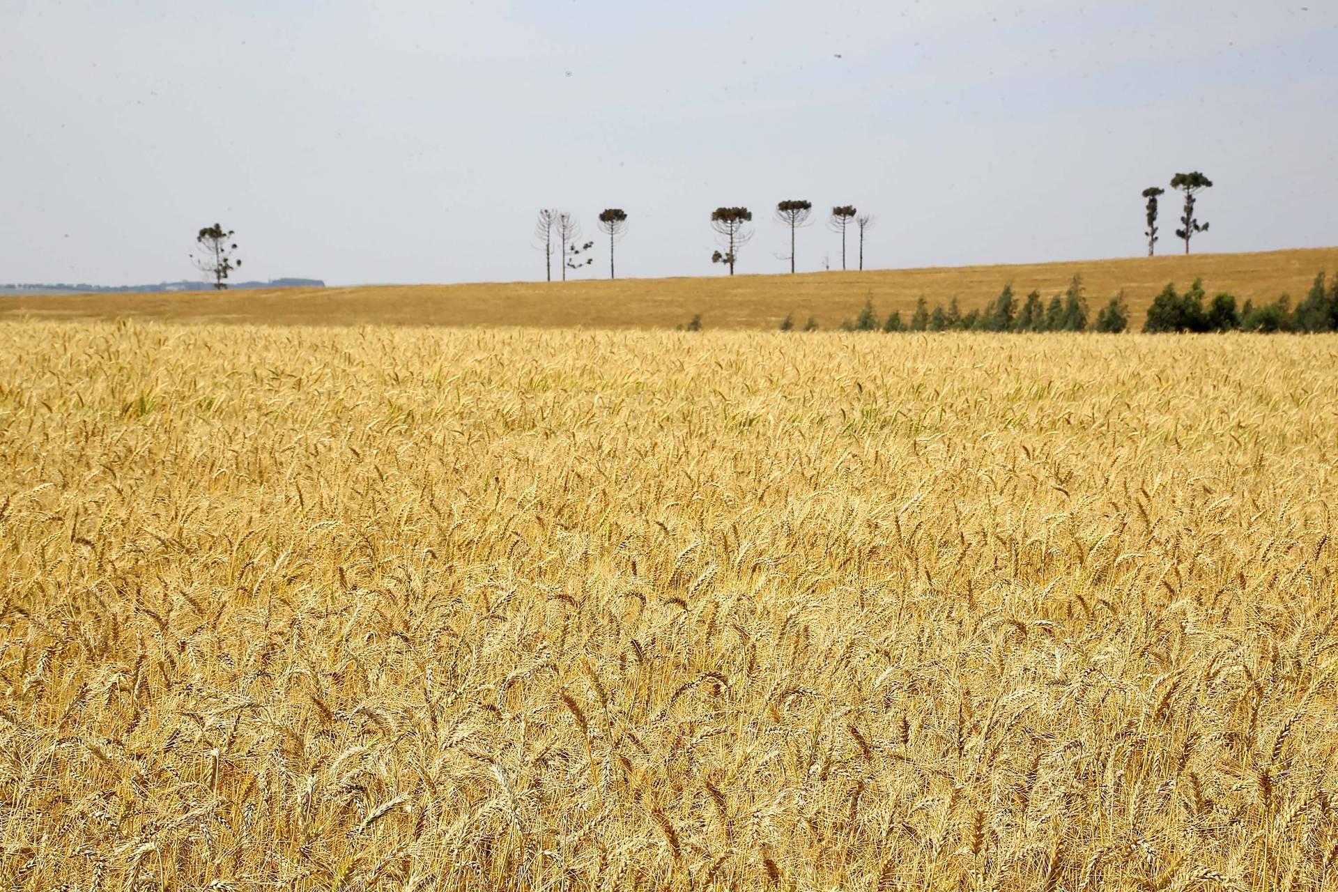 O maior crescimento no comparativo com o mesmo período de 2018 foi no setor agropecuário, com alta de 10%. A projeção do Ipardes para o PIB do ano é de crescimento de 0,7%.