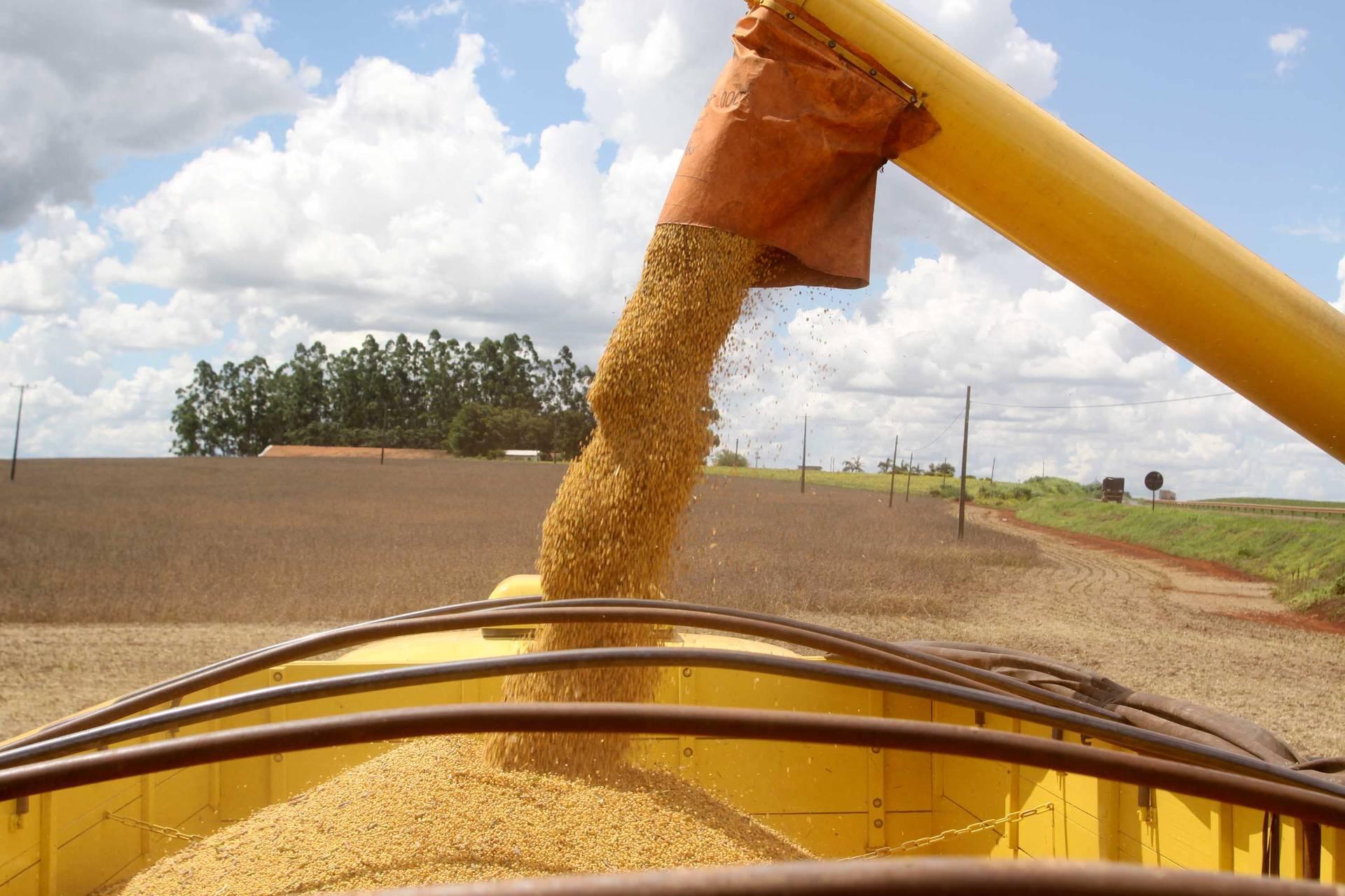 A soja se destaca no relatório deste mês com área recorde de 5,5 milhões de hectares, que pode permitir ao Paraná uma produção próxima de 20 milhões de toneladas